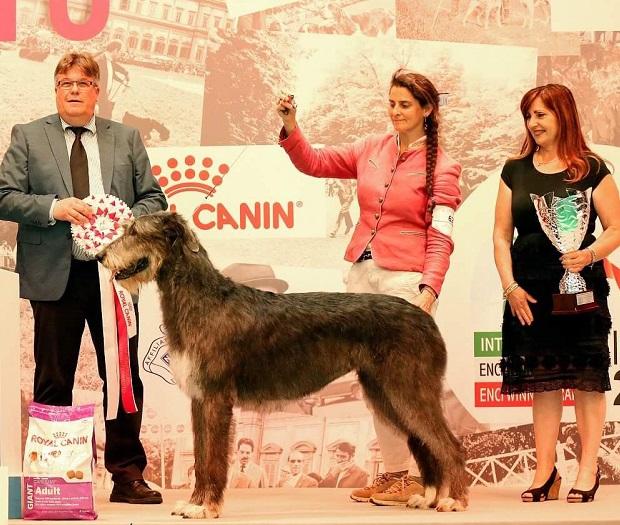意大利米兰国际宠物展览会_现场照片